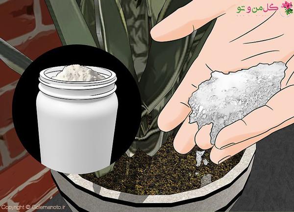 از بین بردن مورچه خاک گلدان با خاک دیاتومه DE