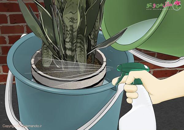 قرار دادن گلدان داخل تشت صابون حشره کش
