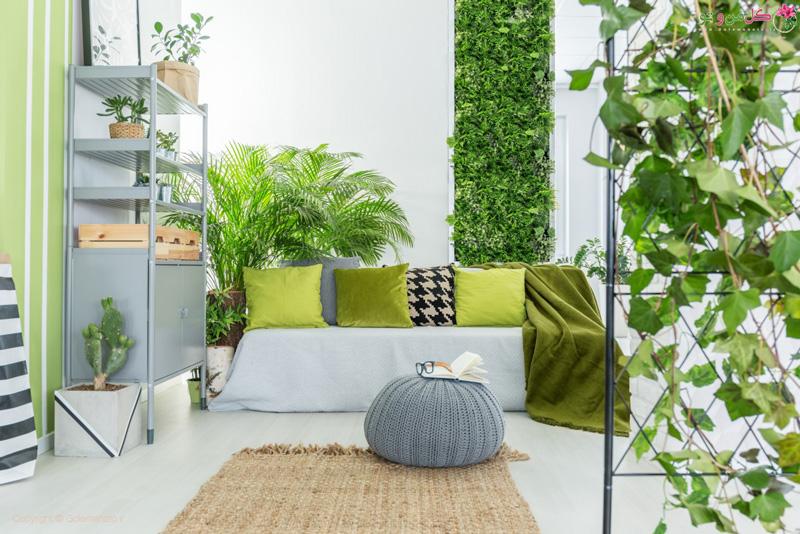 روش های تقویت گل های آپارتمانی