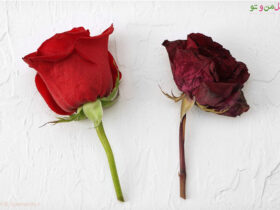 خشک کردن گل طبیعی در خانه