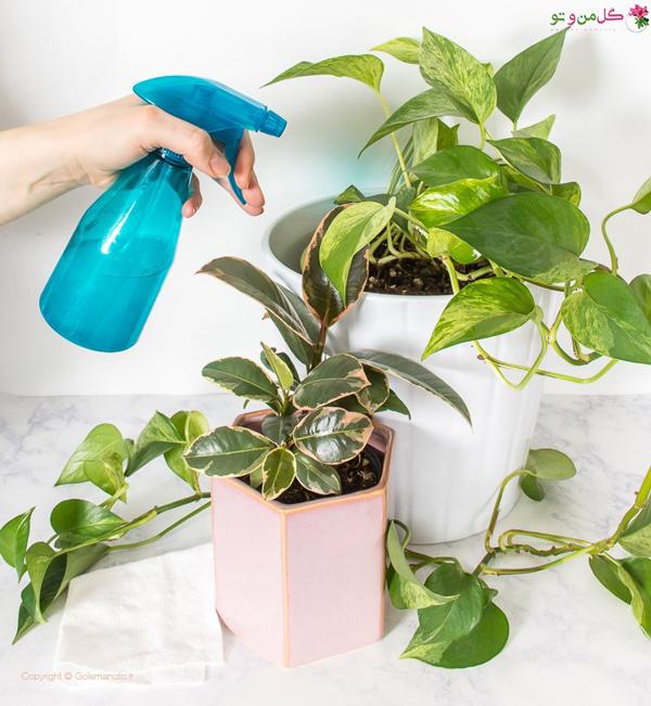 تقویت گیاهان آپارتمانی - تمیز کردن برگها