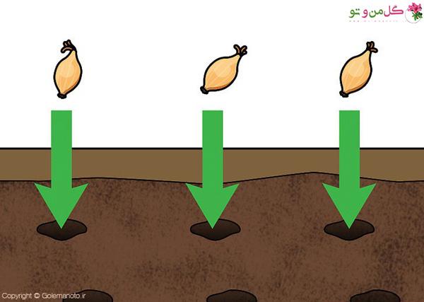 قرار دادن بذر در خاک