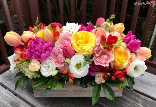 گلهای بهاری زیبا