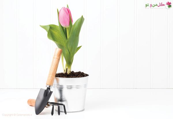 زمان کاشت پیاز گل لاله