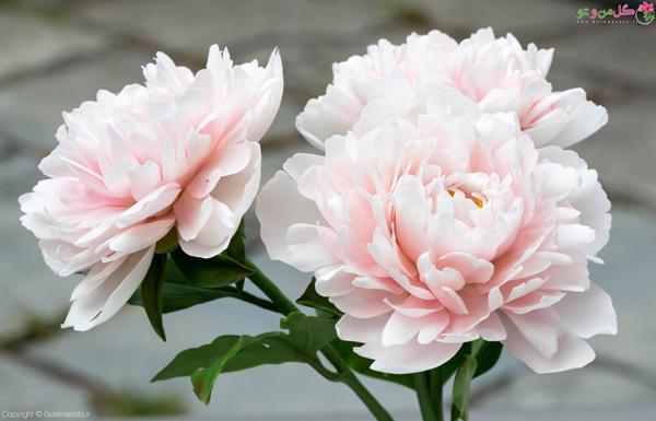 گل صد تومانی - گل خوشبو مناسب بالکن و حیاط