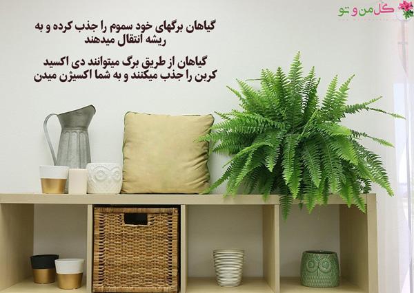 گیاهان چطور هوای اتاق را تصفیه میکنند؟