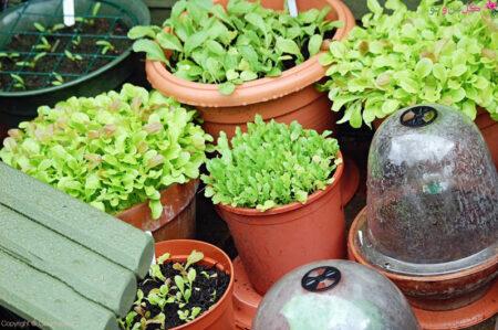 نحوه کاشت سبزیجات در گلدان