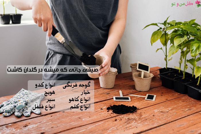 صیفی جاتی مناسب کاشت در گلدان
