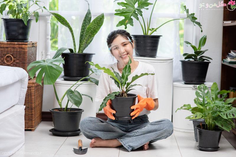 نکاتی برای شادابی گیاهان آپارتمانی