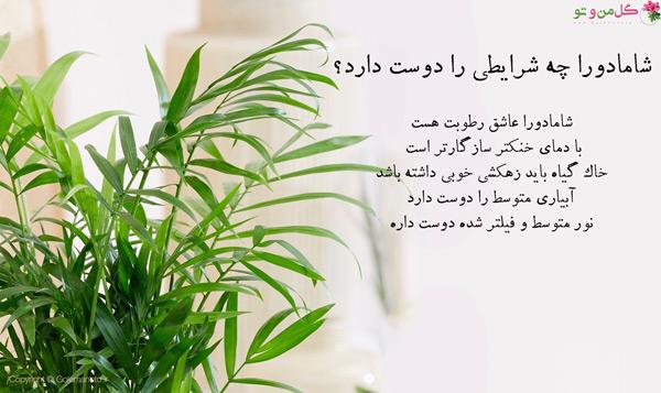 نیازهای گیاه شامادورا برای کاهش مشکلات گیاه