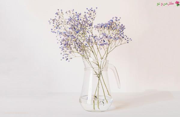 ژیپسوفیلا بهترین گل مناسب هدیه برای خانم ها