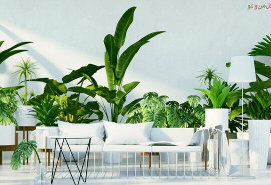 گیاهان آپارتمانی لوکس