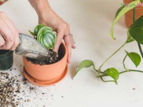 روش تعویض گلدان در خانه