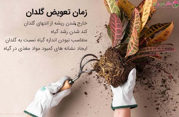 7 نکته طلایی برای تعویض گلدان | روش تعویض گلدان که گیاه پژمرده نشود؟ | گل  من و تو