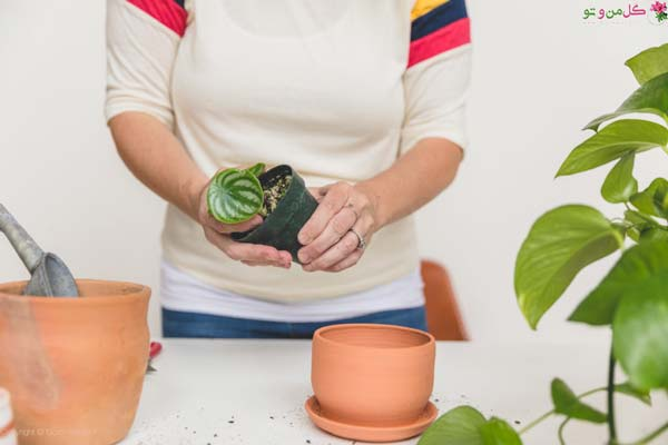 نحوه تعویض گلدان - خارج کردن گیاه