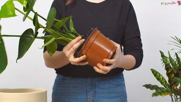 نحوه تعویض گلدان در خانه