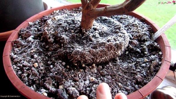 دلایل بوجود آمدن کپک در خاک گلدان