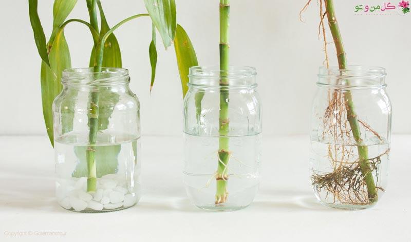 ریشه زایی گیاهان در آب