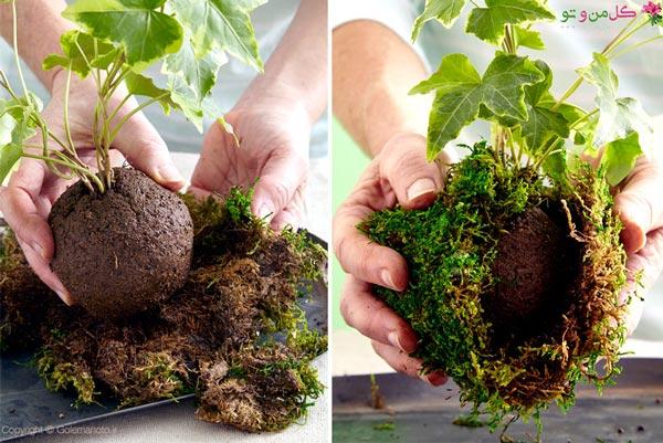 طرز تهیه کوکدما در خانه - پیچیدن خزه