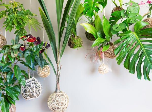 گیاهان مناسب کوکداما