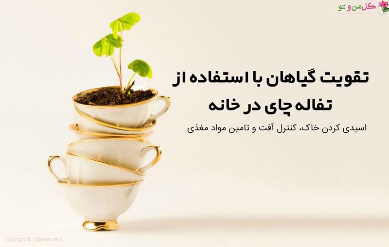 استفاده از تفاله چای برای گیاهان