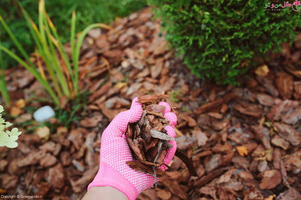 استفاده از خرده چوب برای گیاهان