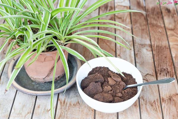 استفاده از تفاله قهوه برای گلدان و گیاهان