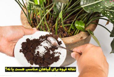 تفاله قهوه برای گیاهان آپارتمانی