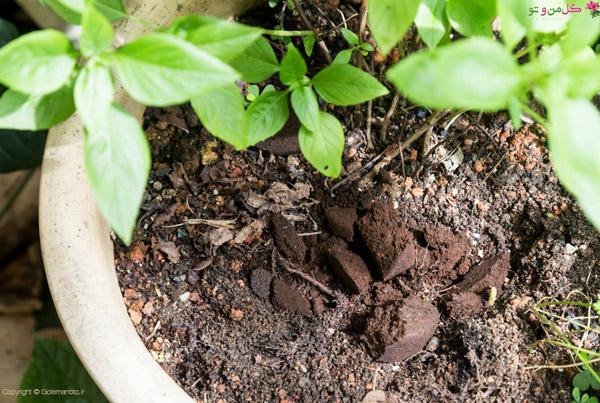 استفاده از تفاله قهوه برای گیاهان