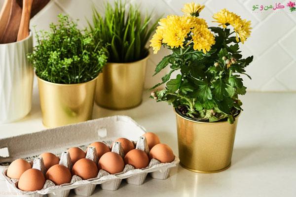 پوست تخم مرغ کود خانگی برای گلدان