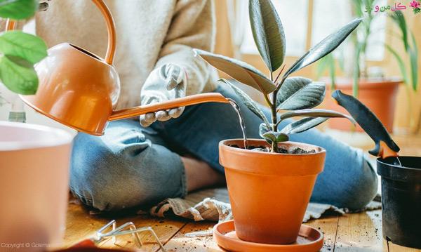 آبیاری درست مانع بیماری و آفت گیاهان آپارتمانی