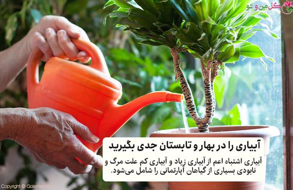 اصل آبیاری برای نگهداری گیاهان در تابستان و بهار مهم است