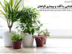 آفت و بیماری گیاهان آپارتمانی