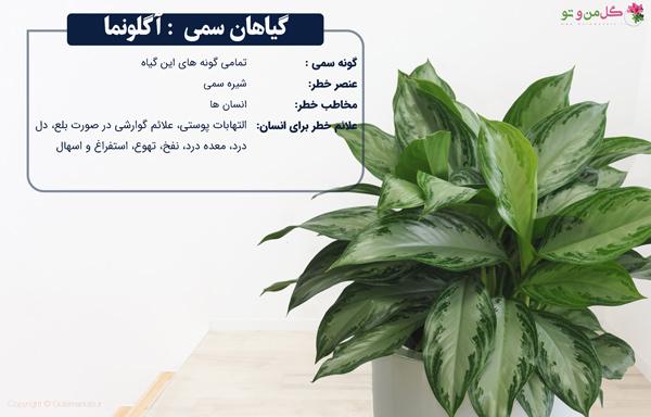 آگونما از گیاهان خانگی سمی