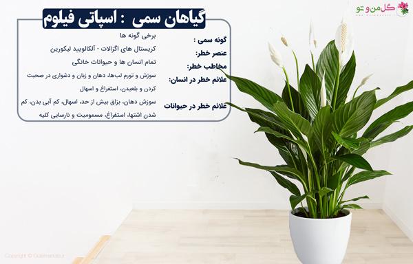 گیاهان خانگی سمی اسپاتی فیلوم