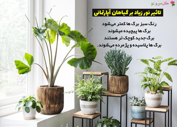 نور گیاهان آپارتمانی نباید زیاد باشه