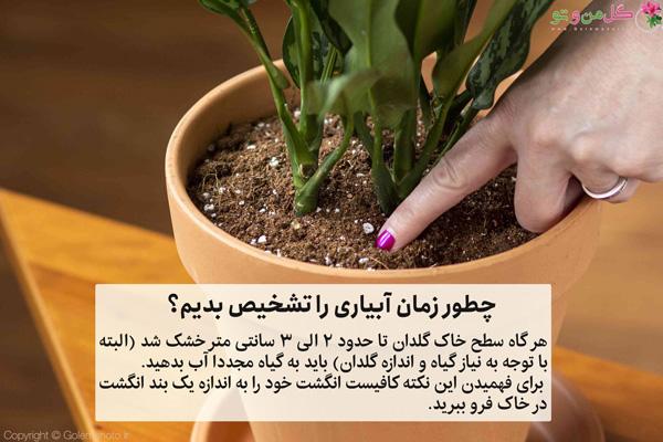 تشخیص زمان آبیاری گیاهان