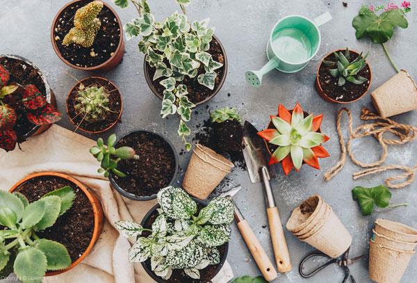 تعویض خاک گلدان