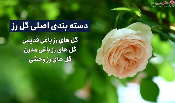 دسته بندی انواع گل رز