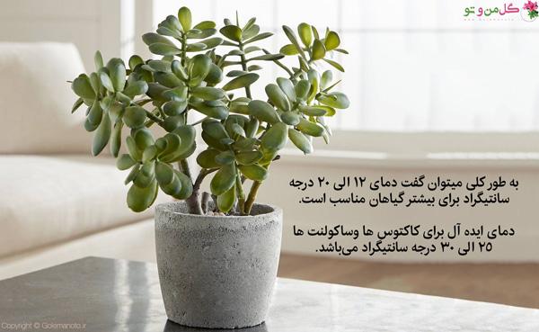 دمای نگهداری گیاهان در تابستان