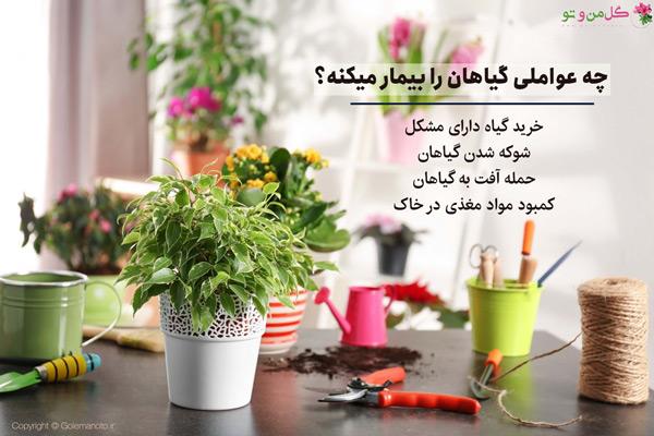 عوامل دخیل در بیماری گیاهان