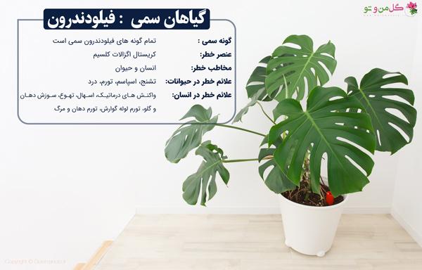 فیلودندرون گیاه سمی