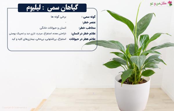 لیلیوم از گیاهان گلدار و سمی