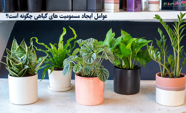 عوامل ایجاد مسمومیت های گیاهی چگونه است؟