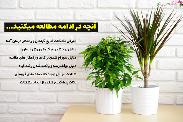 مشکلات رایج گیاهان آپارتمانی