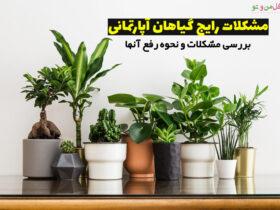 مشکلات گیاهان آپارتمانی