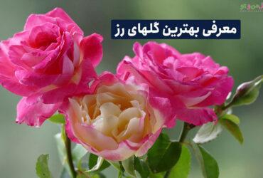 معرفی انواع گل رز