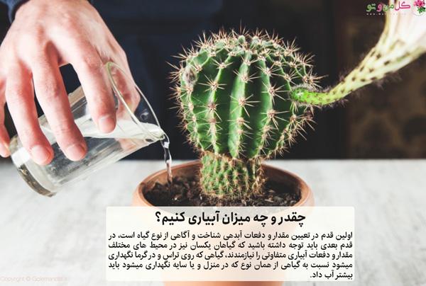 میزان آبیاری گیاهان آپارتمانی