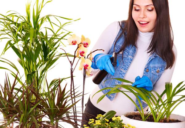 نحوه غبارپاشی گیاهان آپارتمانی
