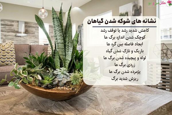 نشانه شوکه شدن گیاهان و بیماری گیاهان
